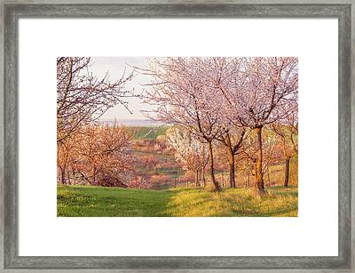 Framed Print featuring the photograph Spring Orchard With Morring Sun by Jenny Rainbow
