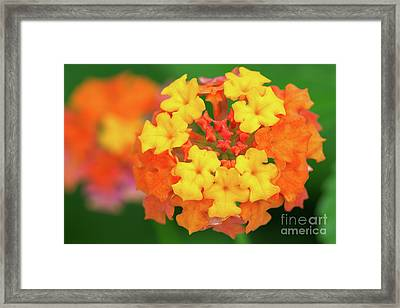 Spring Ornament Framed Print by Steven Dillon