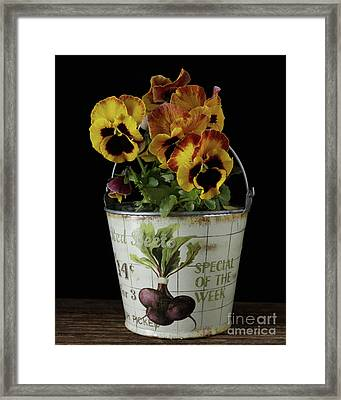 Spring Pansy Flowers In A Pail Framed Print by Edward Fielding
