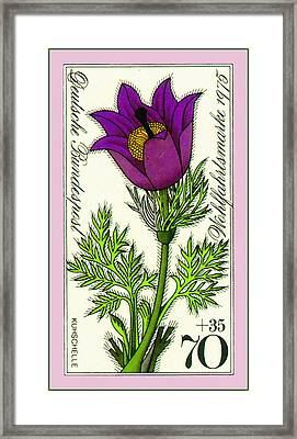 Spring Pasque Flower Framed Print by Lanjee Chee