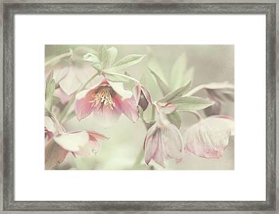 Spring Pastels Framed Print by Jenny Rainbow