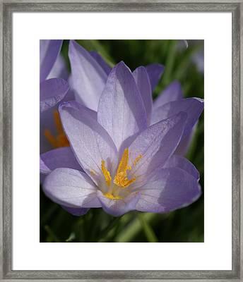 Spring Framed Print by Patricia M Shanahan