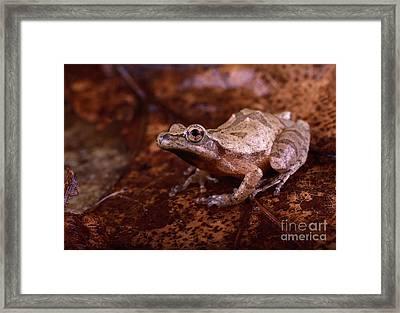 Spring Peeper Framed Print by Lynda Richardson