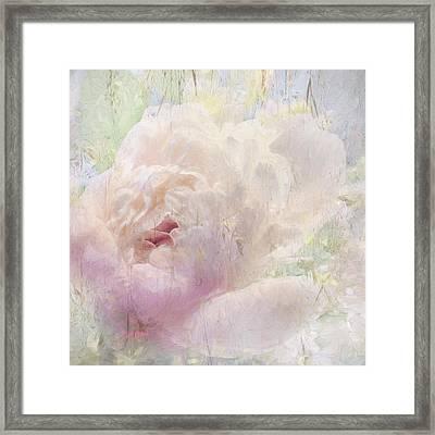 Spring Peony Framed Print by Karen Lynch