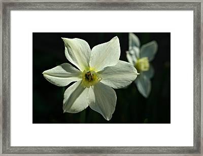 Spring Perennial Framed Print
