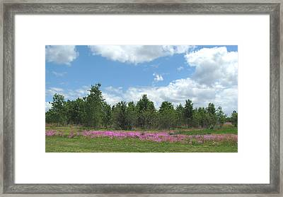 Framed Print featuring the photograph Spring Phlox by Peg Urban