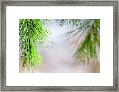 Framed Print featuring the photograph Spring Pine Abstract by Christina Rollo