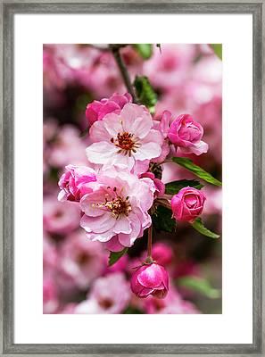 Spring Pink Framed Print by Teri Virbickis