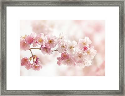 Spring Pinks Framed Print