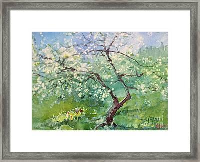Spring Plum Framed Print
