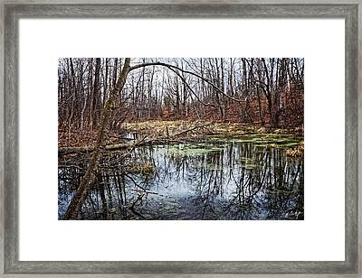 Spring Pond Framed Print by Phill Doherty
