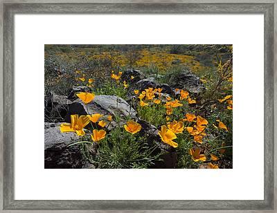 Spring Poppies Framed Print