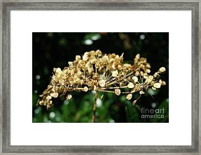Spring Princess Became Queen Of Autumn Framed Print