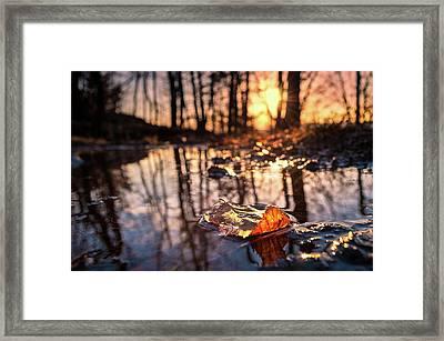 Spring Puddles Framed Print