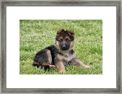 Spring Puppy Framed Print by Sandy Keeton