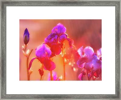 Spring Rain Framed Print by Leland D Howard
