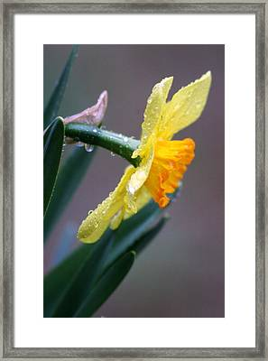 Spring Rain Framed Print by Linda Russell