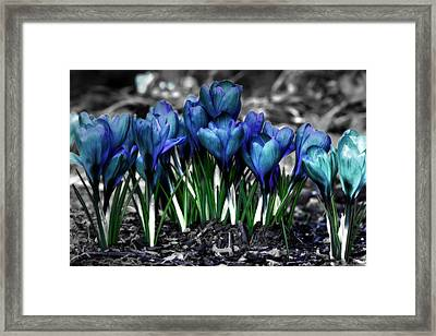 Framed Print featuring the photograph Spring Rebirth by Shelley Neff