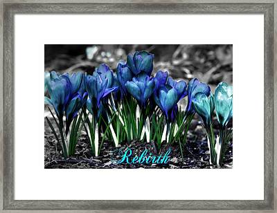 Framed Print featuring the photograph Spring Rebirth - Text by Shelley Neff