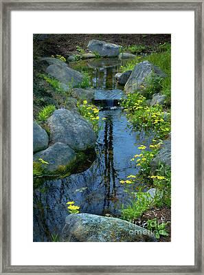 Spring Reflection  Framed Print by Skip Willits