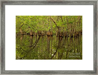 Spring Reflections At Manatee Springs Framed Print by Adam Jewell