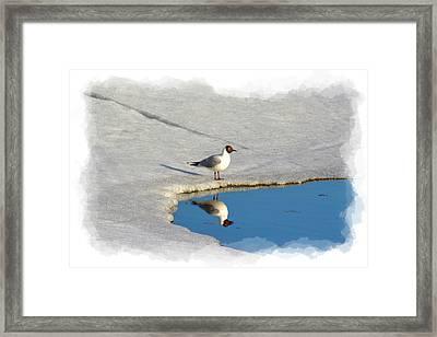 Spring Reflections Framed Print by Torfinn Johannessen