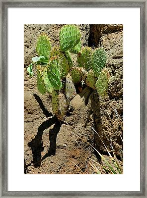 Spring Refreshment Framed Print