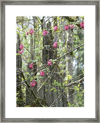 Spring Renewal  Framed Print by Pamela Patch