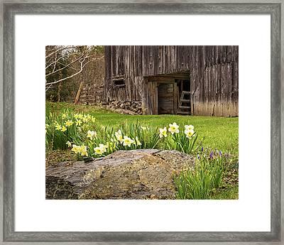 Spring Revival Framed Print by John Vose