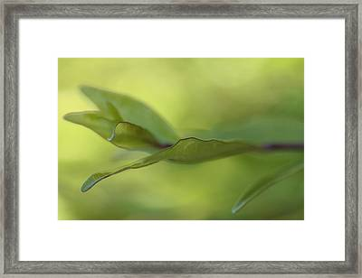 Spring Rhythm Framed Print
