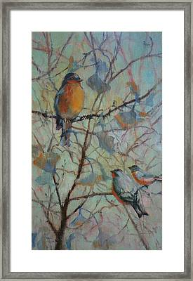 Spring Robin And Company Framed Print by Donna Shortt