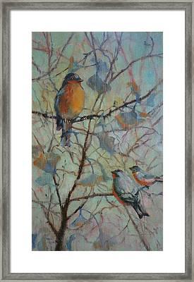 Spring Robin And Company Framed Print