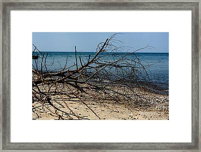 Spring Season And A Hot Day At The Beach Framed Print by Reva Steenbergen