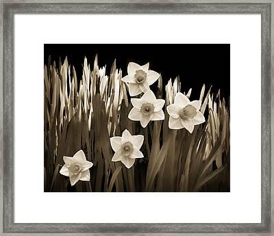 Spring - Sepia Framed Print