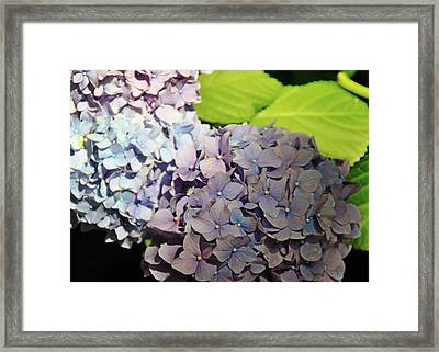 Spring Shades Framed Print by JAMART Photography