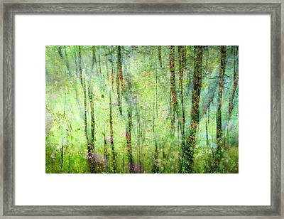 Spring In The Woods Framed Print by Shirley Sirois