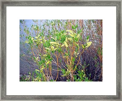 Spring Shoreline Framed Print