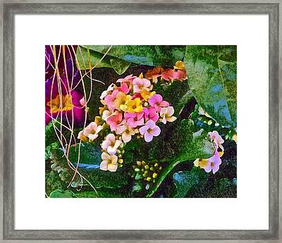 Spring Show 12 Framed Print