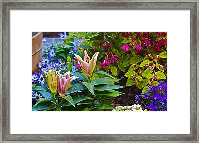Spring Show 15 Lilies Framed Print