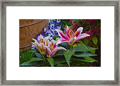 Spring Show 15 Lily Trio Framed Print