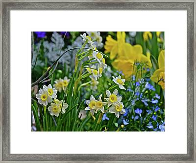 Framed Print featuring the photograph Spring Show 18 A Sea Of Daffodils by Janis Nussbaum Senungetuk