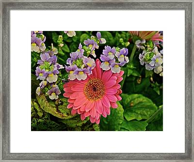 Framed Print featuring the photograph Spring Show 18 Gerbera Daisy With Snapdragons by Janis Nussbaum Senungetuk