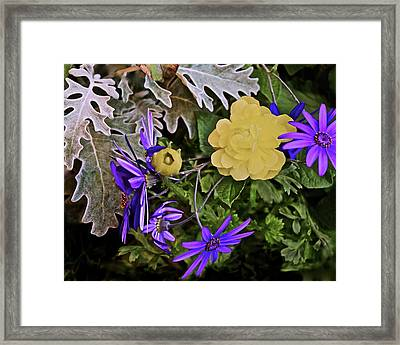 Framed Print featuring the photograph Spring Show 18 Persian Buttercup With Florist's Cineraria 2 by Janis Nussbaum Senungetuk