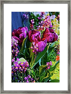 Framed Print featuring the photograph Spring Show 18 Red Violet Tulips With Toadflax 1 by Janis Nussbaum Senungetuk