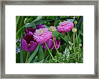 Framed Print featuring the photograph Spring Show 18 Tulips And Ranunculus by Janis Nussbaum Senungetuk
