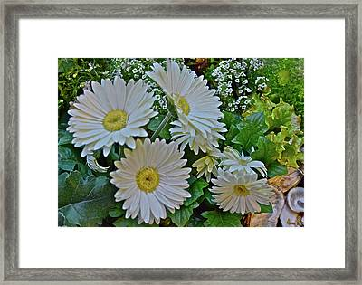 Framed Print featuring the photograph Spring Show 18 White Gerbera Daisies by Janis Nussbaum Senungetuk