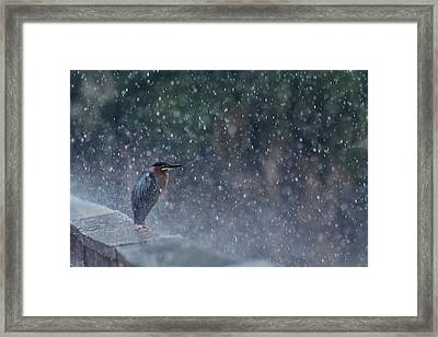 Spring Shower Framed Print