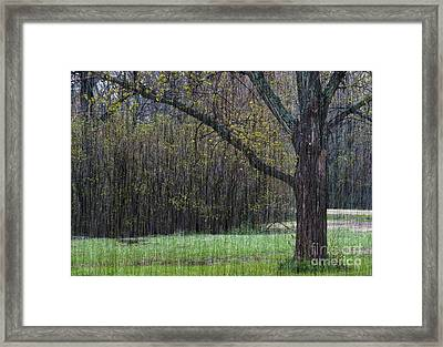 Spring Shower Framed Print by Fred Lassmann