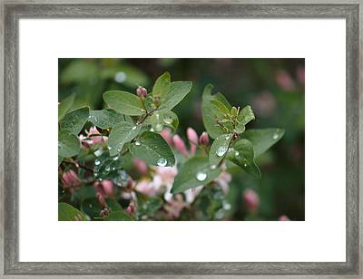 Spring Showers 5 Framed Print