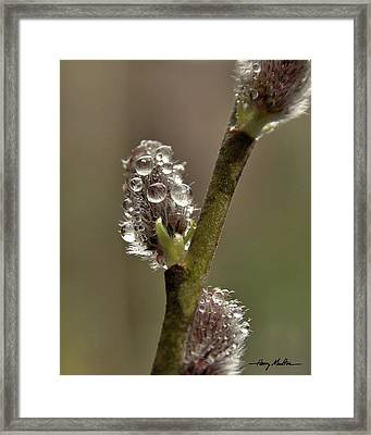 Spring Showers Framed Print
